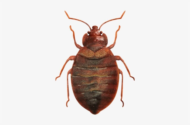 bed bug pest removal services